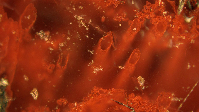 Oldest-ever fossils show life existed on Earth at its infancy - study