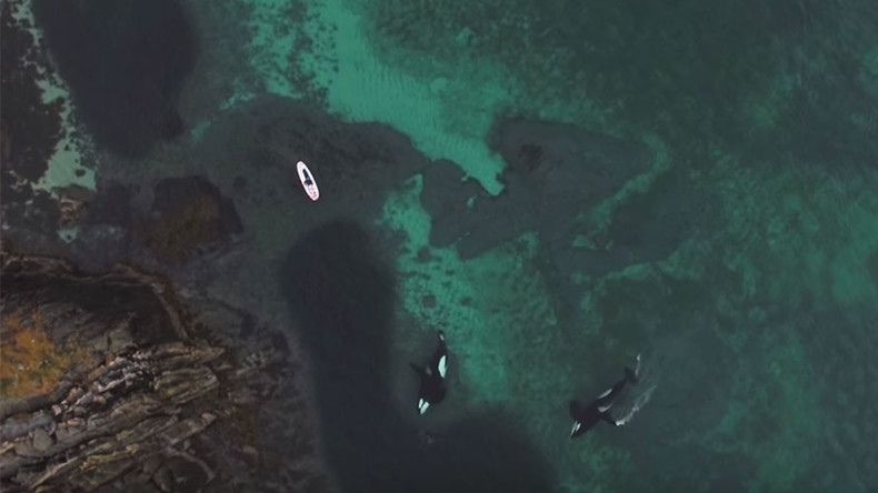 Killer whales filmed alongside diver in amazing footage (VIDEO, PHOTOS)