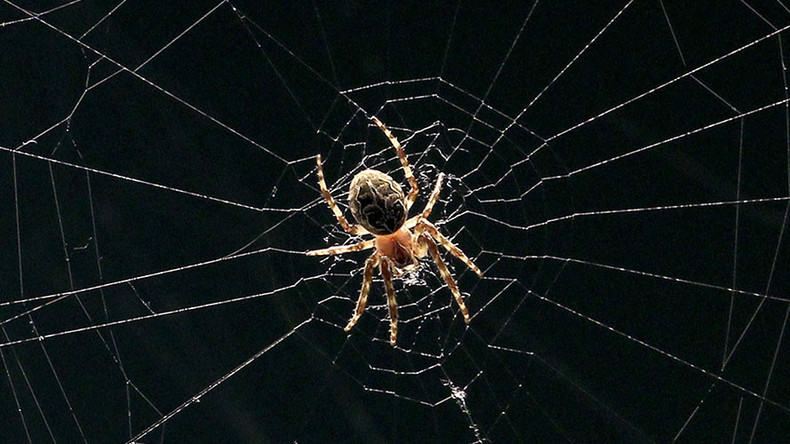 Ravenous spiders eat almost twice as much as humans & more than whales – study