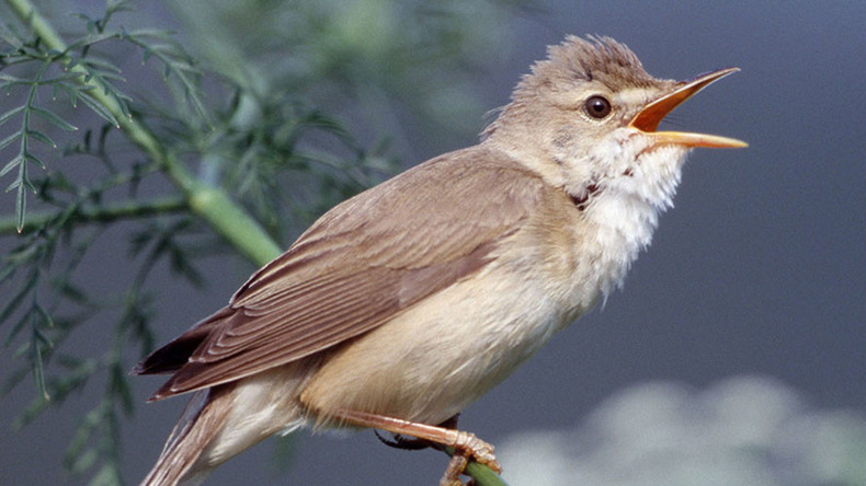 800,000 songbirds illegally killed by poachers on Cyprus military base – RSPB
