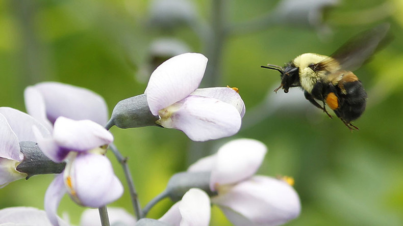 1st bee species officially placed on endangered species list