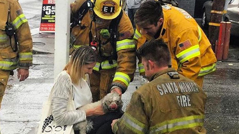 Firefighters rescue dog after 20 minutes of mouth-to-snout resuscitation (PHOTOS, VIDEO)