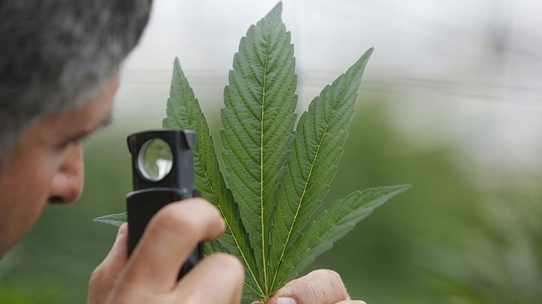 DEA approves synthetic marijuana for big pharma company against legalization