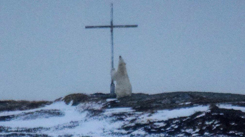 Paws for reflection: Polar bear captured 'praying' next to cross  (PHOTOS)