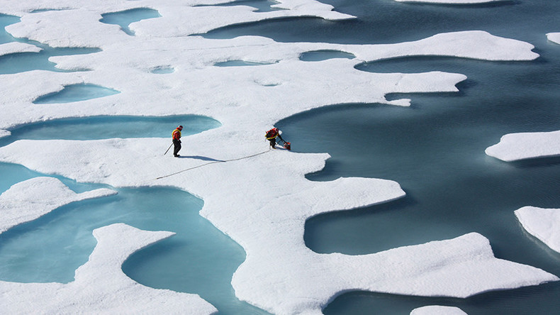 Melting sea ice may actually increase Arctic sea life – study