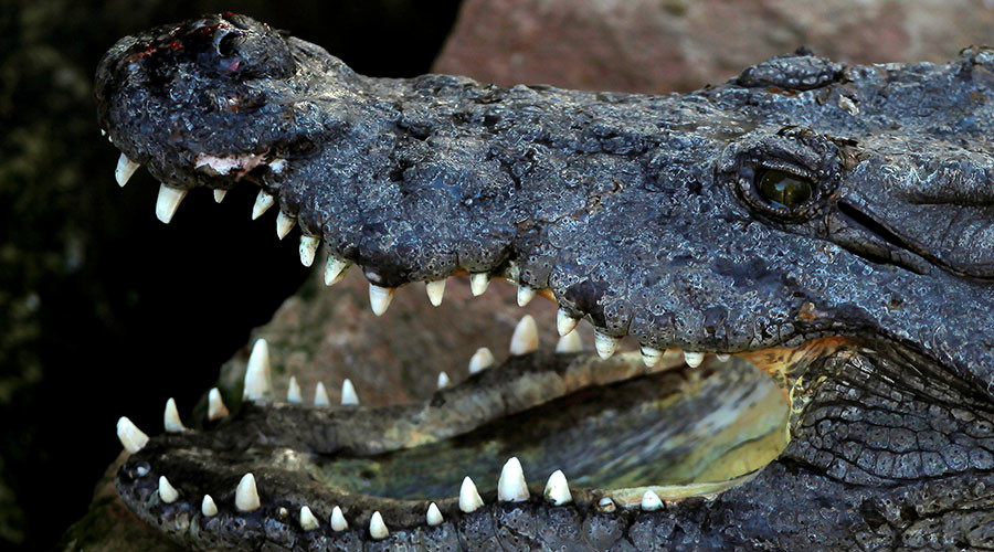Croc bludgeoned with rocks in brutal attack at Tunisia zoo (GRAPHIC PHOTOS)