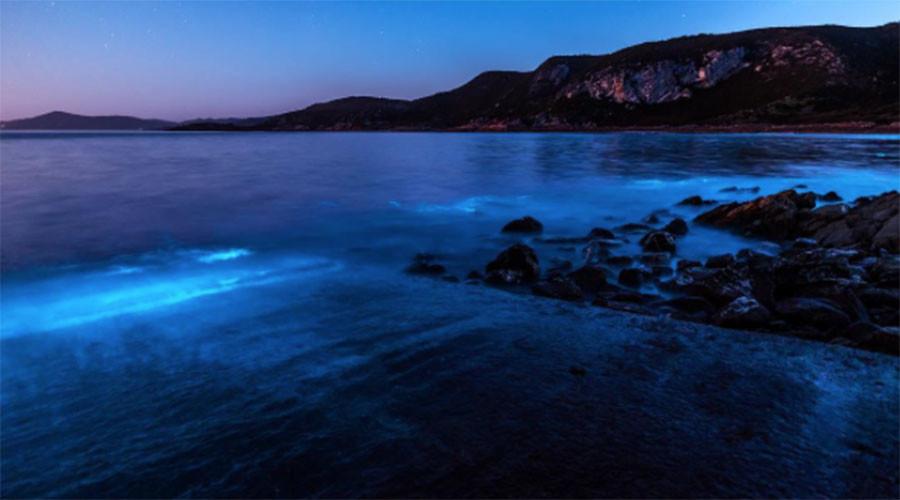 Neon blue 'vacuum cleaner' algae lights up ocean in stunning display (PHOTOS)