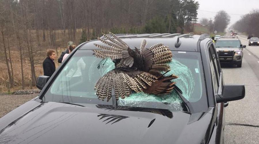 Turkey v SUV: Bird smashes through windshield in high-speed collision (PHOTOS)