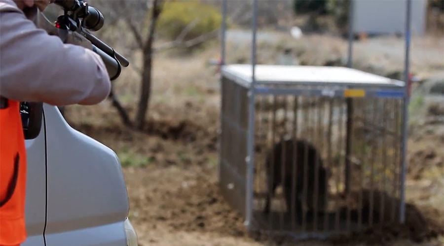 Hunters kill radioactive boars in Fukushima ghost towns (GRAPHIC VIDEO)