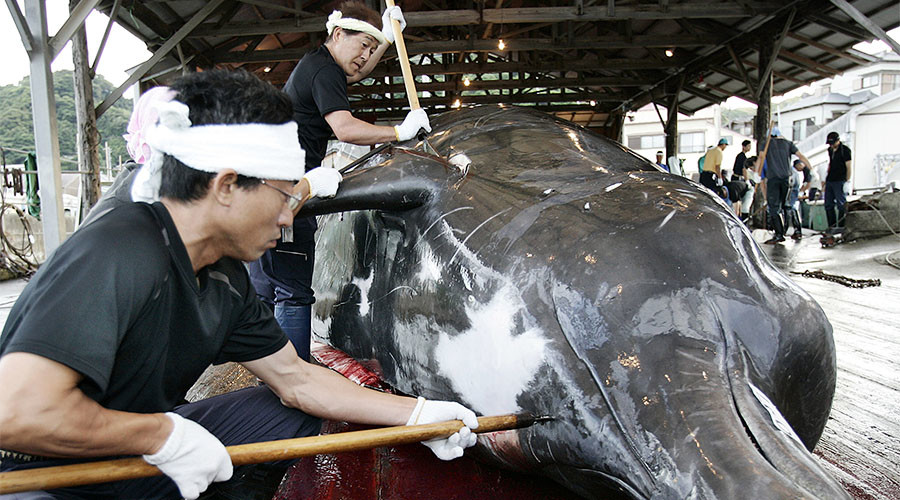 Japan kills 333 whales for 'research purposes' despite intl criticism