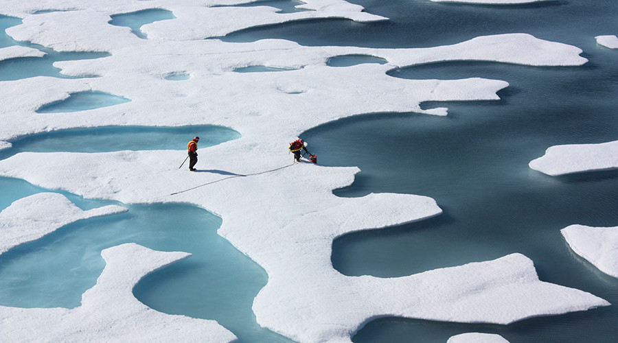 Melting sea ice may actually increase Arctic sea life – study
