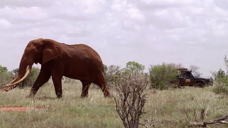 © Great Elephant Census