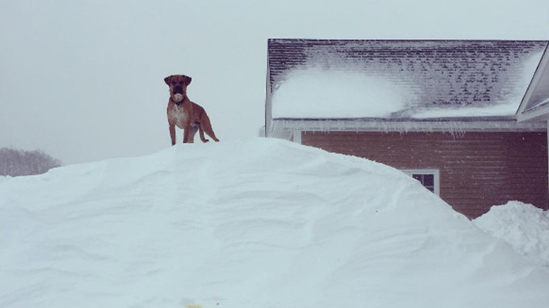 'Snowmageddon': Canada hit with 2m of snow & has mind-boggling pics to prove it (PHOTOS, VIDEOS)