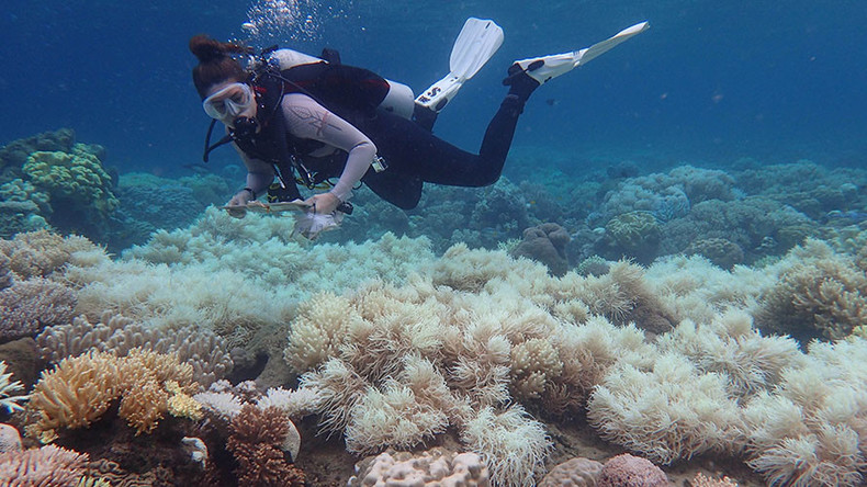 'Severe' bleaching of Great Barrier Reef causes catastrophic damage