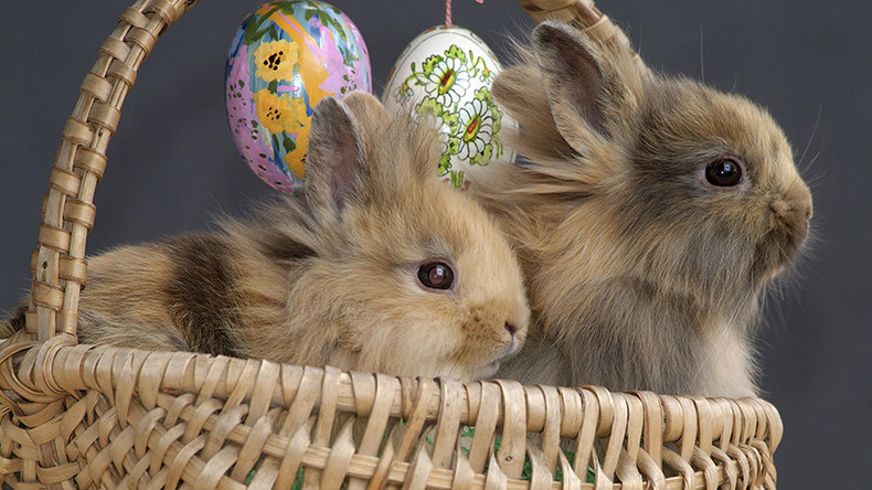 Easter Bunny is real: Foster parents lose children after refusing to 'lie'
