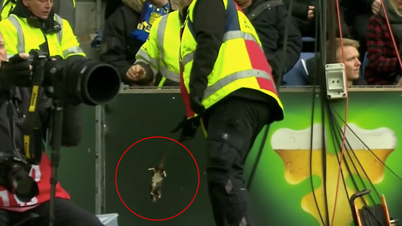 Football fans hurl rats at player during Brondby-Copenhagen derby