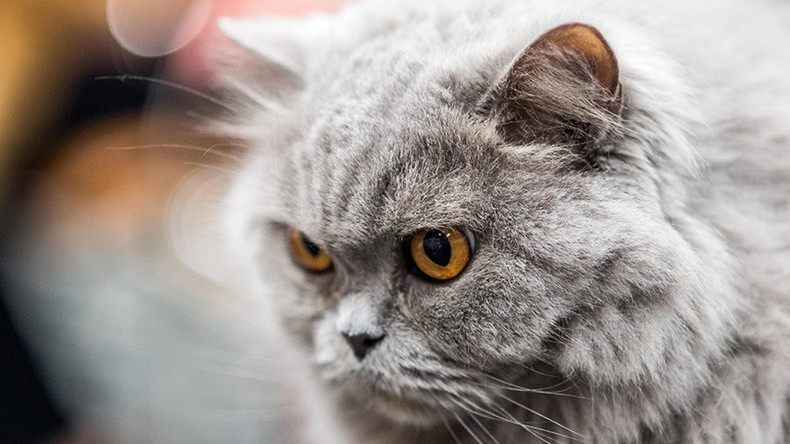 'Cat Killer' becoming 'more brazen' as 3 bodies discovered in Hampshire