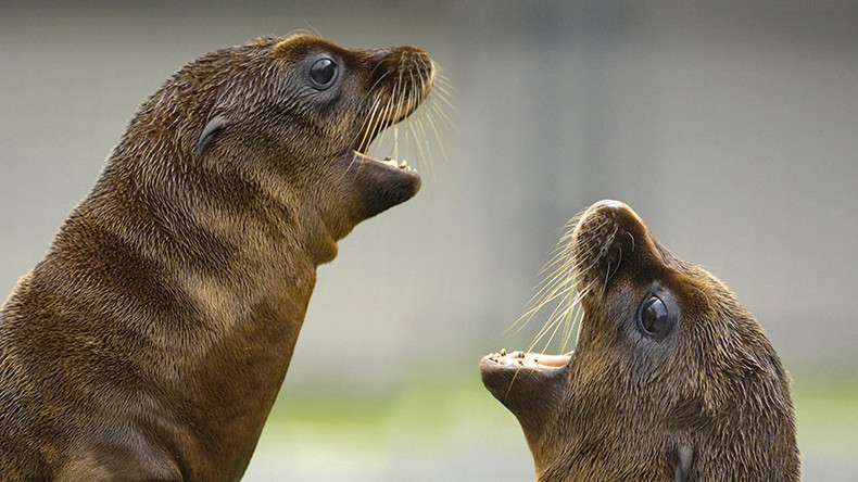 Algae toxin killing marine mammals along California coast