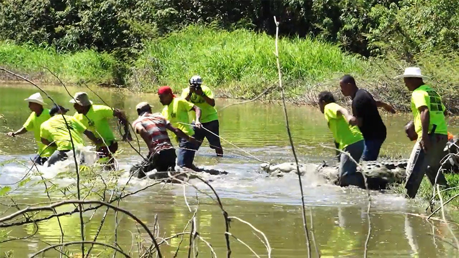 Easter crocodile hunters of Costa Rica (VIDEO)
