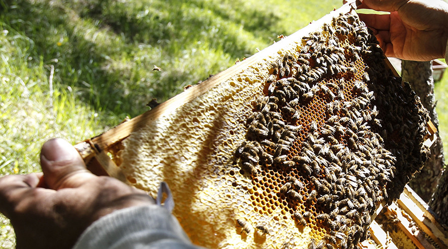 What's the buzz? Over 1mn bees worth €15,000 stolen in Austria