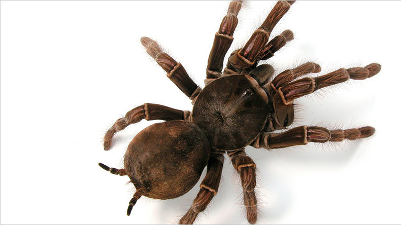 Giant bird-eating tarantula found abandoned on Leicester street