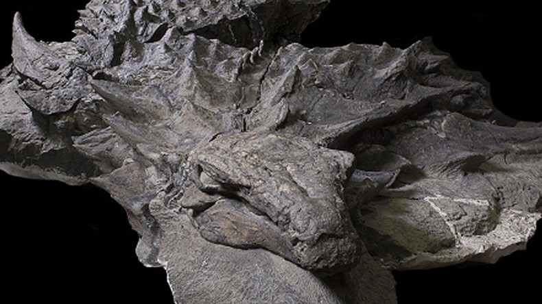 'Sleeping dragon' fossil the best preserved armored dinosaur ever found (PHOTO)