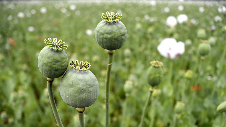 Police stumble on $500mn opium poppy field in North Carolina