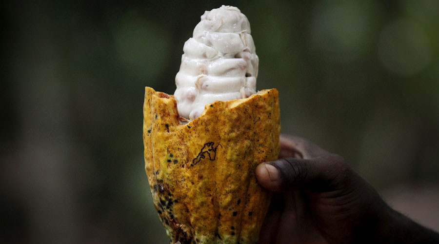 Chocolate could get more expensive with rising unrest in Cote d'Ivoire