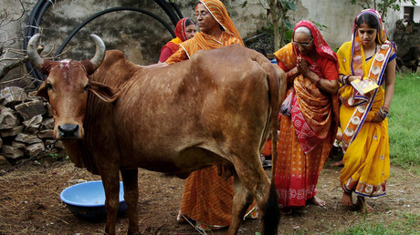 'Cow vigilantes' kill two men over suspected animal theft in India