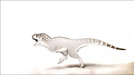 Last of the dinosaurs: Fossil of African T. rex contemporary found in Moroccan mine