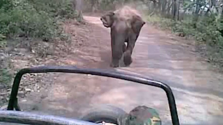 Rampaging elephant chases down tourists in Indian national park (VIDEO)