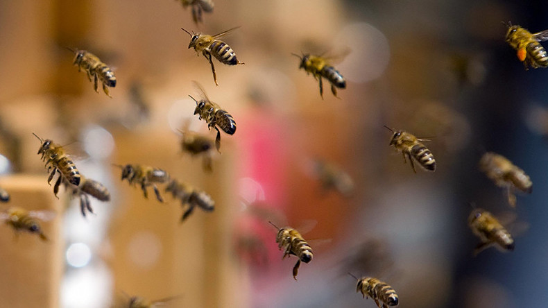 Swarm of bees shuts down New York midtown street