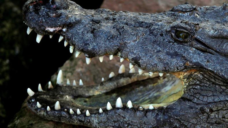 'Welcome to Florida, folks!': Pilot hits alligator on Orlando runway (PHOTO)