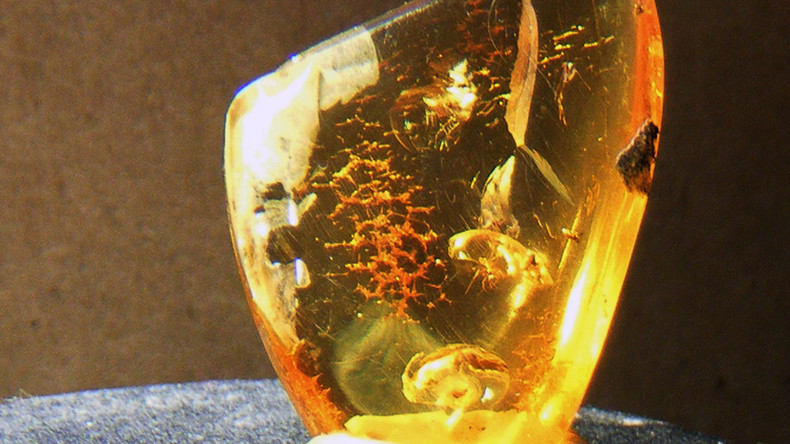 99 million yo toothed bird found near-perfectly preserved in amber (PHOTOS)