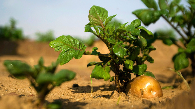 Space spuds: China aims to grow potatoes & raise worms on moon