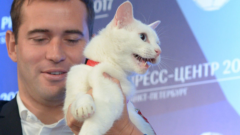 Meet Achilles the Cat, deaf 'animal psychic' who will predict 2017 Confed Cup results