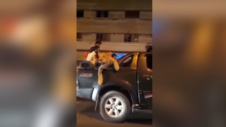 Man arrested for 'parading' pet lioness through Karachi streets (VIDEO)