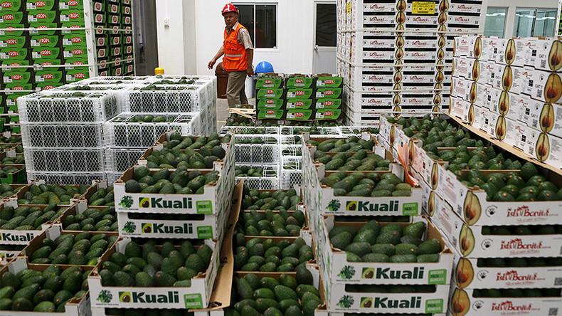 Cops bust trio for 'grand theft avocado'