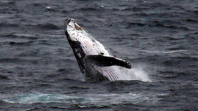 Breathtaking footage captures moment humpback whale took NJ fisherman by surprise (VIDEOS)
