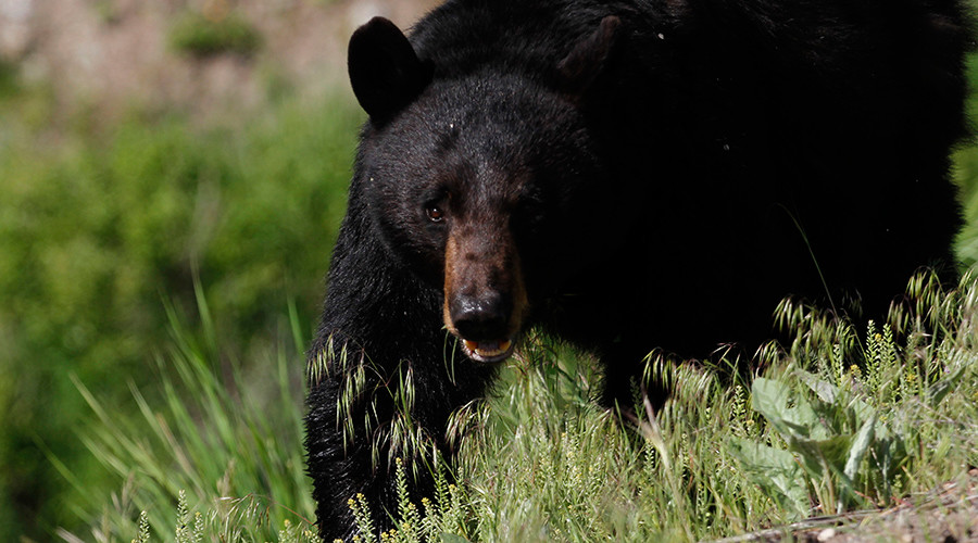 16yo texted mother moments before being mauled to death by black bear in Alaska