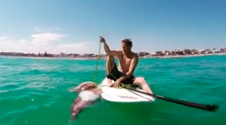 Giant squid wraps tentacles around paddleboard, knocks beachgoer into water (VIDEO)
