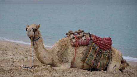 Qatar blockade causing 'logistical headaches' in Persian Gulf – IEA