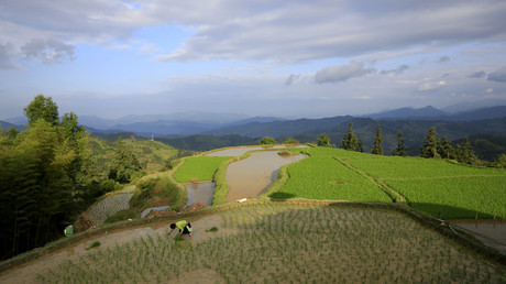 A villager transplants rice seedlings in the village of Basha in Congjiang county, Guizhou province © Jason Lee