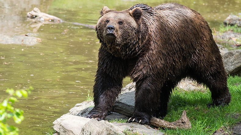 Shotgun-toting 11yo boy blasts attacking bear to save family in Alaska
