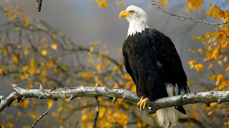 Man who shot & ran over bald eagle facing 1 year in prison