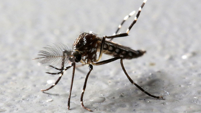 Google's life science division to release 20mn infected mosquitoes in California