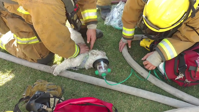 Dramatic video captures firefighters resuscitating a dog rescued from fire (VIDEO)