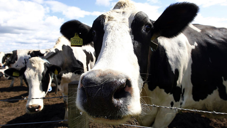 Cows could be surprising ally in fight against HIV