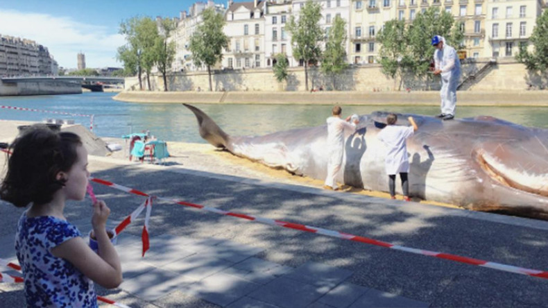 Parisians wake to find 'whale' washed up on banks of the Seine (PHOTOS)