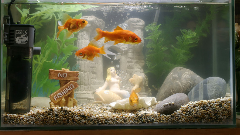 Smart fish tank exposes casino to hackers